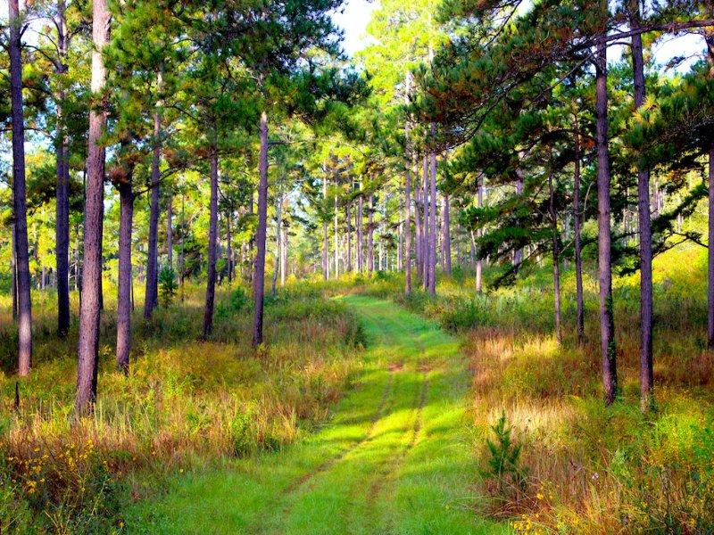 Woodland Corners : Tallahassee : Leon County : Florida