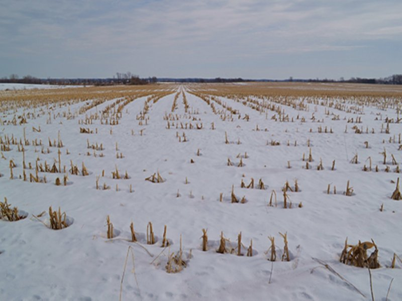 Land Auction-139 Acres In 3 Tracts : Cedar Lake : Lake County : Indiana