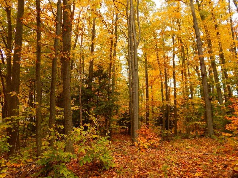 Wonderfully Located Property : Onekama : Manistee County : Michigan
