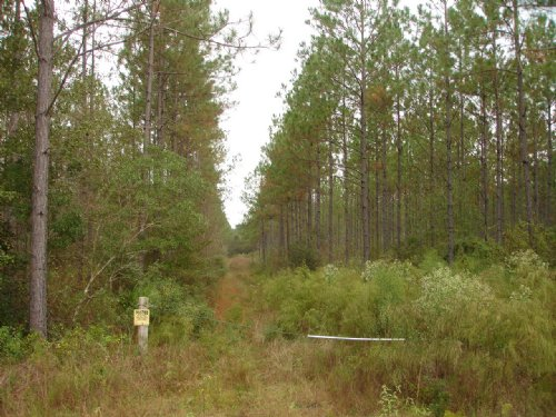 39 Acres On Indian Creek : Moultrie : Colquitt County : Georgia