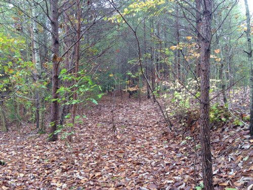 16.796 +/- Wooded Acres, Rydal : Rydal : Bartow County : Georgia