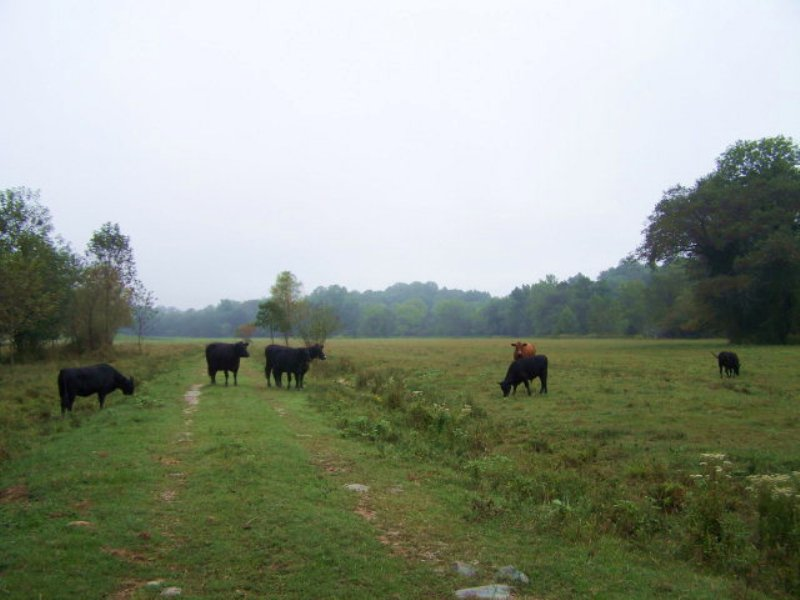 Large Farmland Tract : Chatham : Pittsylvania County : Virginia