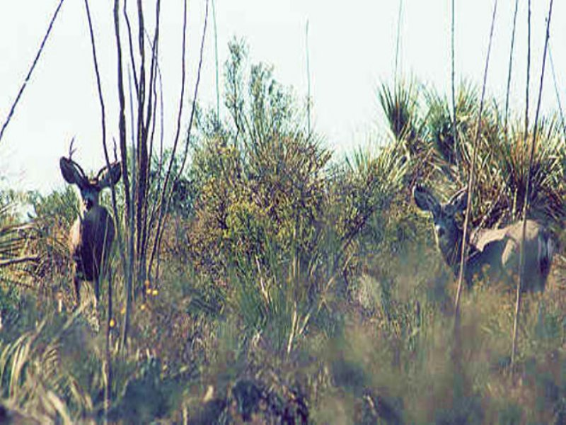 Rugged Trans Pecos Hunting Land : Sanderson : Brewster County : Texas