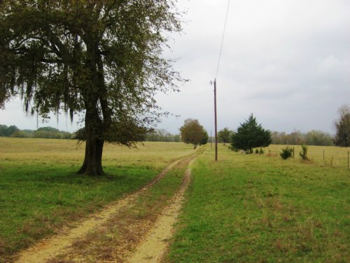 Hope Hull, Alabama 190 +/- Acres : Hope Hull : Montgomery County : Alabama