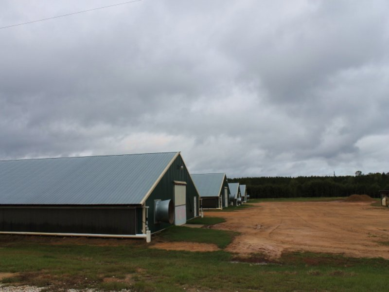 Six House Broiler Farm : Newton : Dale County : Alabama