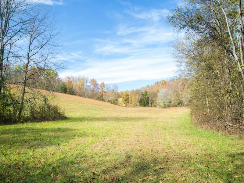 205 Acres Bordering Wildlife Refuge : Dover : Stewart County : Tennessee