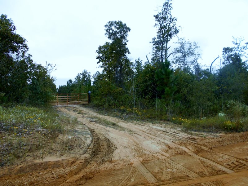 100 Wooded Acres, 1 Large Creeks : Butler : Taylor County : Georgia