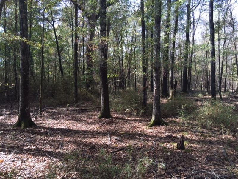80 Ac - Mixed Timberland For Huntin : Delhi : Franklin Parish : Louisiana