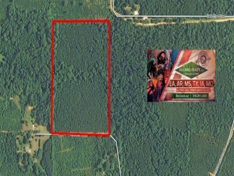 36.60 Acres Hunting Land, Timber : Bastrop : Morehouse Parish : Louisiana