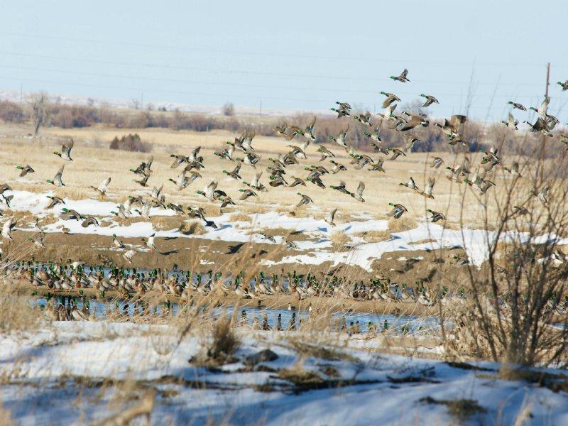 Winemaker's Island Preserve : Mcgrew : Scotts Bluff County : Nebraska