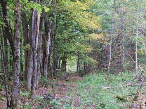 28 Acres Tug Hill Region Hunting : Camden : Oneida County : New York