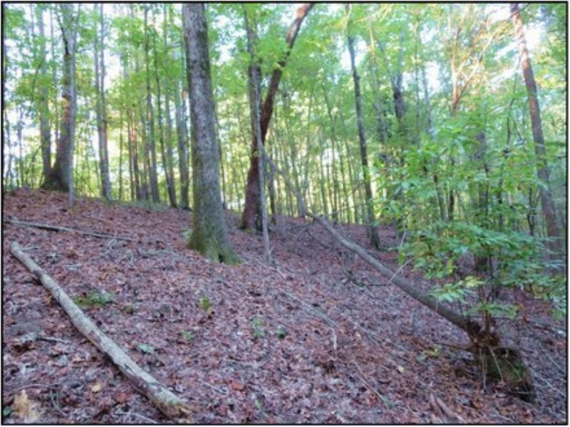 29.00 Acres Recreation Land, Timber : Meridian : Lauderdale County : Mississippi