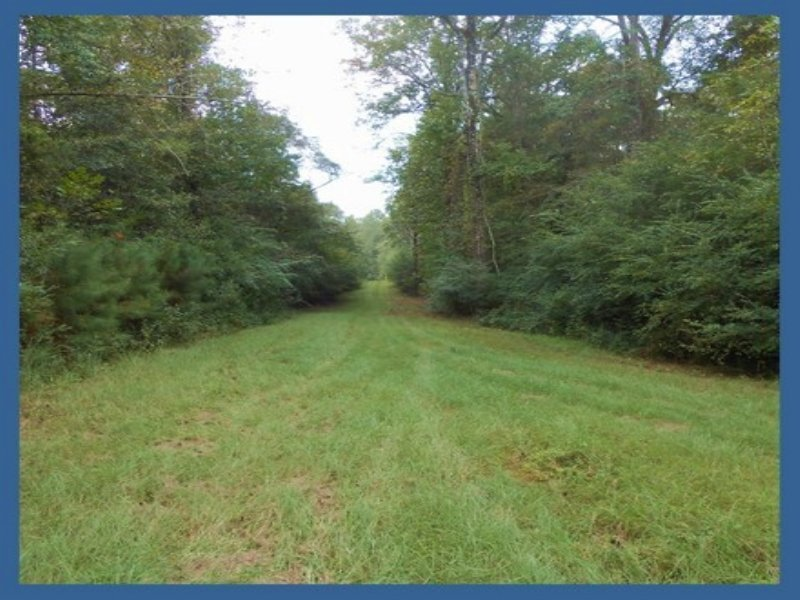 22.78 Acres Hunting Land, Timber : Summit : Pike County : Mississippi