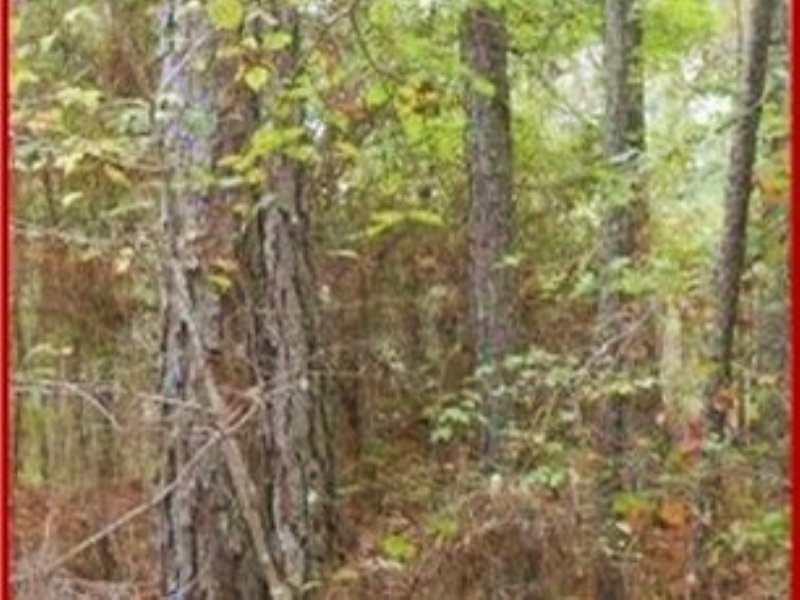 42.00 Acres Hunting Land, Timber : Ackerman : Choctaw County : Mississippi