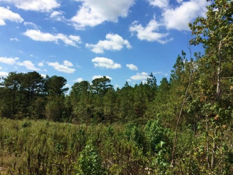 Land For Sale Choctaw, Ms : Ackerman : Choctaw County : Mississippi