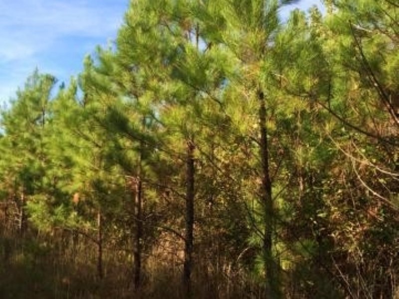121.00 Acres Hunting Land : Mccarley : Carroll County : Mississippi