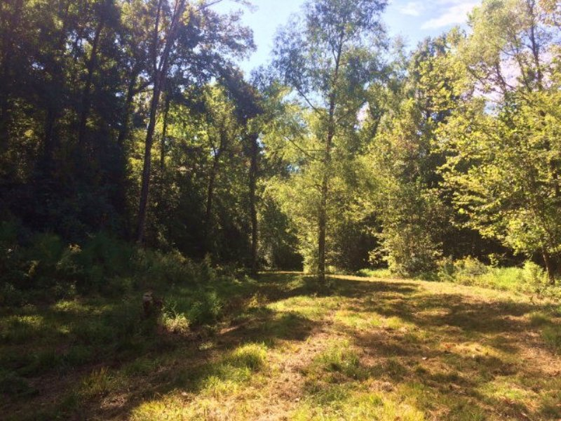 225.00 Acres Hunting Land, Timber : Woodville : Wilkinson County : Mississippi