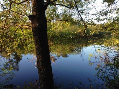 79 Riverfront Acres : Nahunta : Brantley County : Georgia