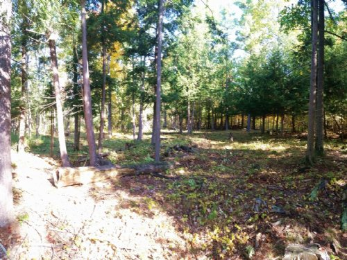 Hunting Land Manicured Trails 46 Ac : Brownville : Jefferson County : New York