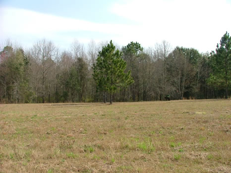 1.84 Acres : Swainsboro : Emanuel County : Georgia