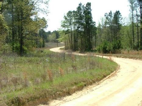 1.59 Acres : Thomson : McDuffie County : Georgia
