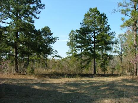 21 Acres : Millen : Jenkins County : Georgia
