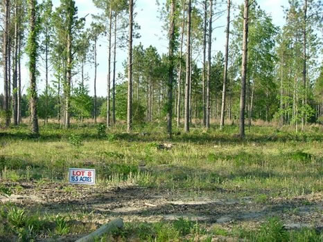 15.5 Acres : Metter : Candler County : Georgia