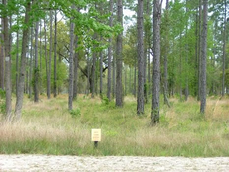.73 Acre Lot | Coopers Point : Darien : McIntosh County : Georgia
