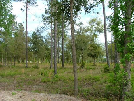 .72 Acre Lot | Coopers Point : Darien : McIntosh County : Georgia