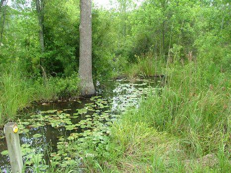 61.39 Acres : Swainsboro : Emanuel County : Georgia