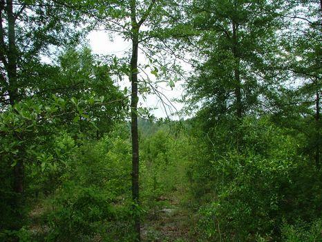 39.23 Acres : Swainsboro : Emanuel County : Georgia