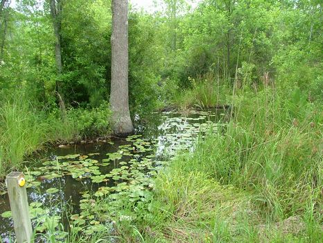 27.41 Acres : Swainsboro : Emanuel County : Georgia