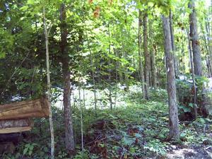 9.80 Acres  : Hillsboro : Pocahontas County : West Virginia
