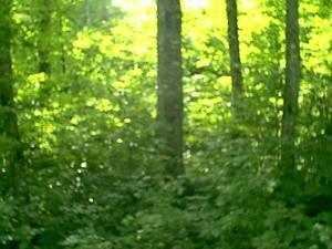 4.92 Acres  : Point Mountain : Randolph County : West Virginia