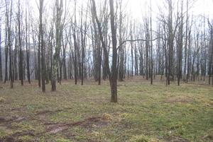 3.00 Acres  : Snowshoe : Pocahontas County : West Virginia