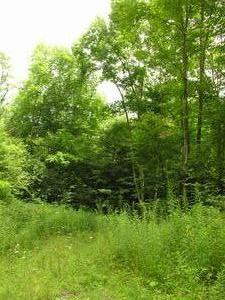 16.09 Acres  : Hillsboro : Pocahontas County : West Virginia