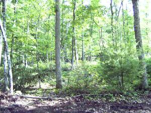 2.00 Acres  : Marlinton : Pocahontas County : West Virginia