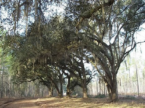 2,681 Acres : Hardeeville : Jasper County : South Carolina