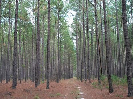 835 Acres : Wrightsville : Johnson County : Georgia
