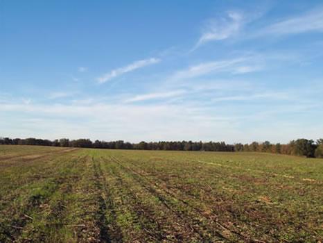41.15 Acres : Sandersville : Washington County : Georgia