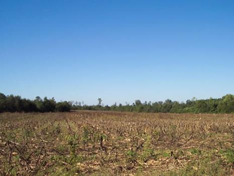 153.944 Acres : Wrightsville : Johnson County : Georgia