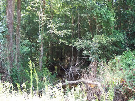 188.86 Acres : Sandersville : Washington County : Georgia