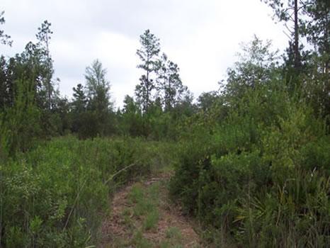 209 Acres : Waycross : Ware County : Georgia