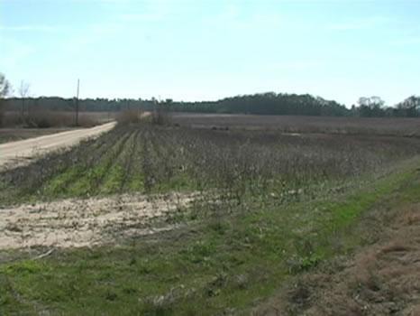 42 Acres : Rochelle : Wilcox County : Georgia