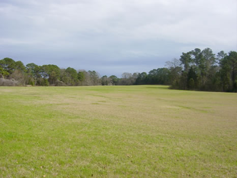 333 +/- Acres : Georgetown : Quitman County : Georgia