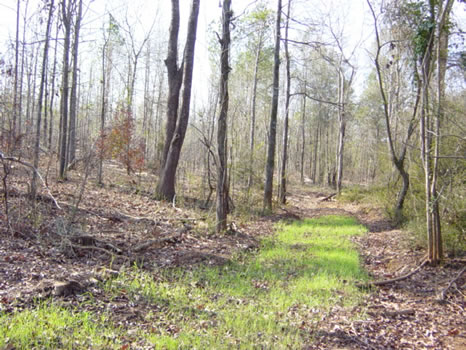 50 +/- Acres : Americus : Sumter County : Georgia