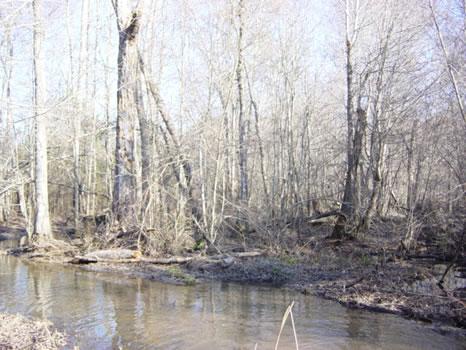 96 Acres : Hawkinsville : Pulaski County : Georgia