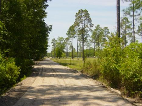 123 Acres : Waycross : Ware County : Georgia