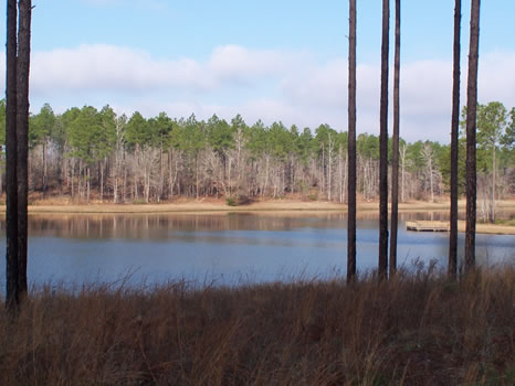 5.98 Acre Lot | Highland Lakes : Eastman : Dodge County : Georgia