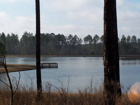4.43 Acre Lot | Highland Lakes : Eastman : Dodge County : Georgia